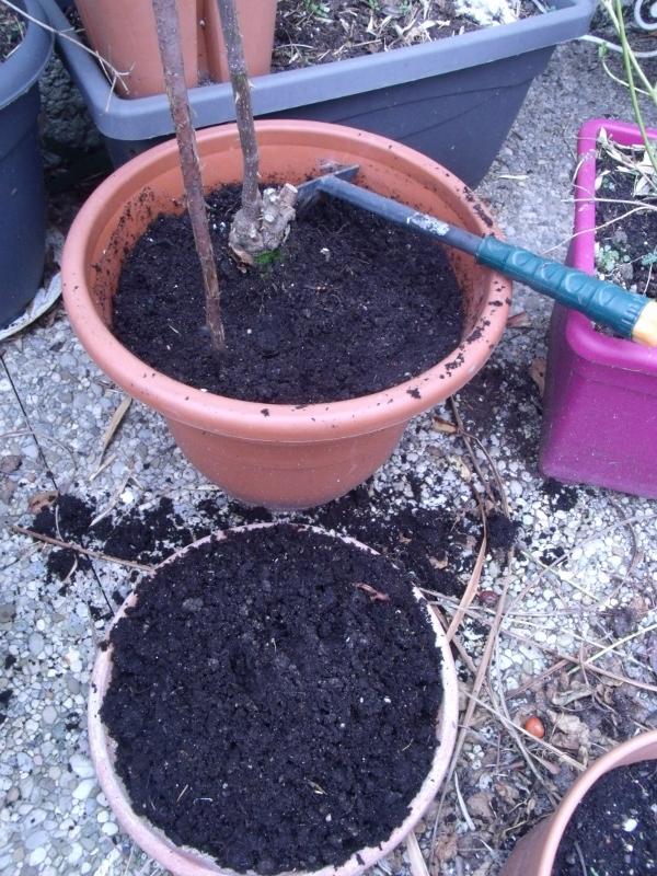 chevrefeuille balcon terrasse petit jardin en pot sur le balcon. Black Bedroom Furniture Sets. Home Design Ideas